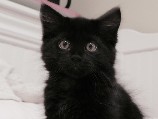 Félix, chaton
