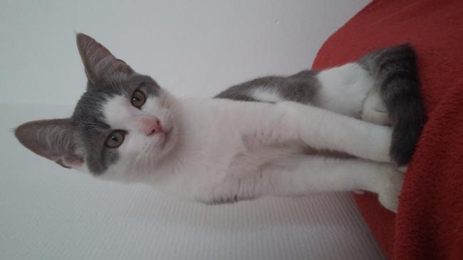 Filou, chaton