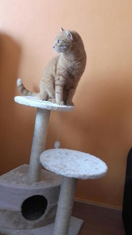 Floky, chat Gouttière