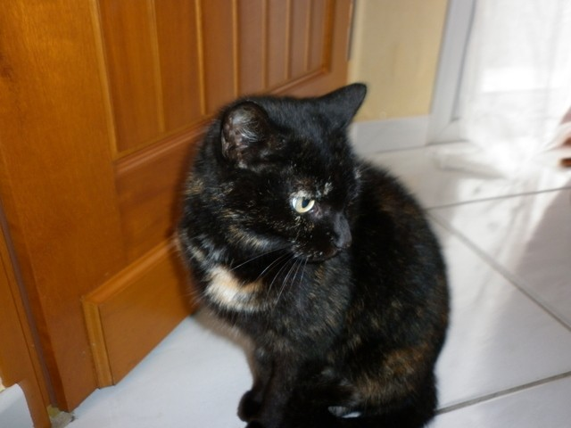 Fripouille, chat Gouttière