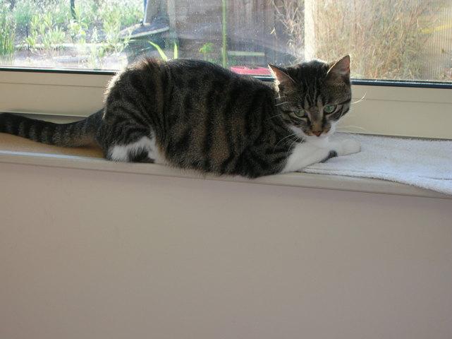 Fripounette, chat Gouttière