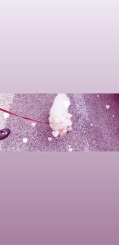 Gala, chien