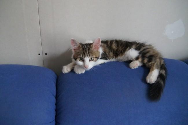 Maya, chaton