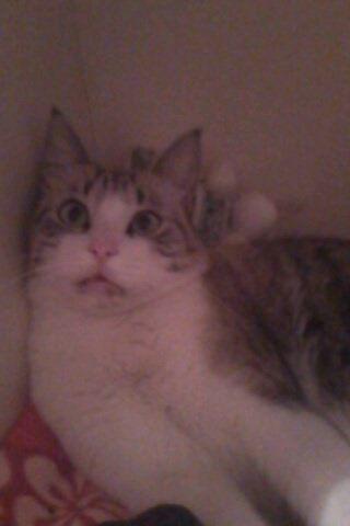 Chance, chat Gouttière