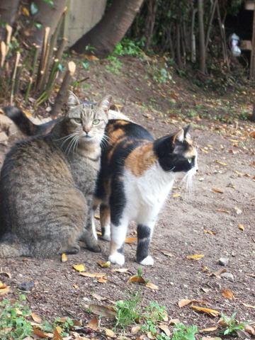Azote, chat Gouttière