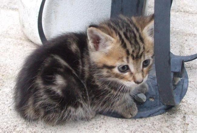 Kookie, chat Gouttière