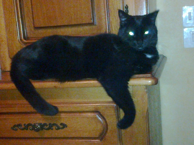 Canelle, chat Gouttière
