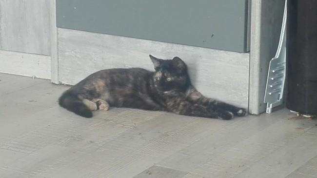 Canelle, chaton Gouttière