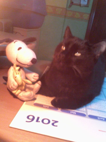Kouki, chat Gouttière