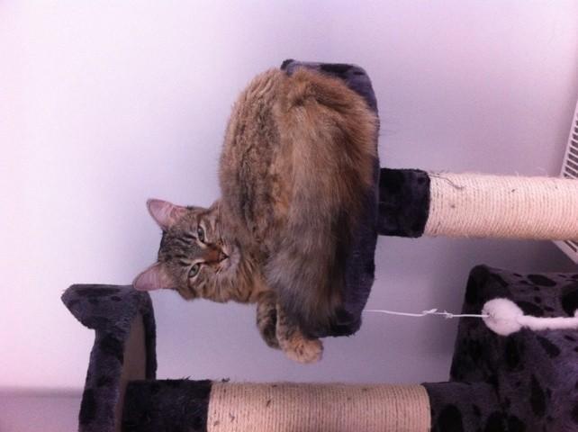 Halley, chat Gouttière