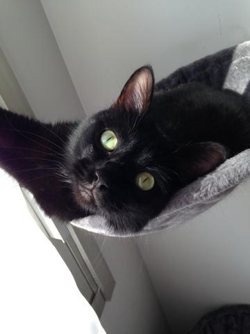 Jazz, chat Gouttière