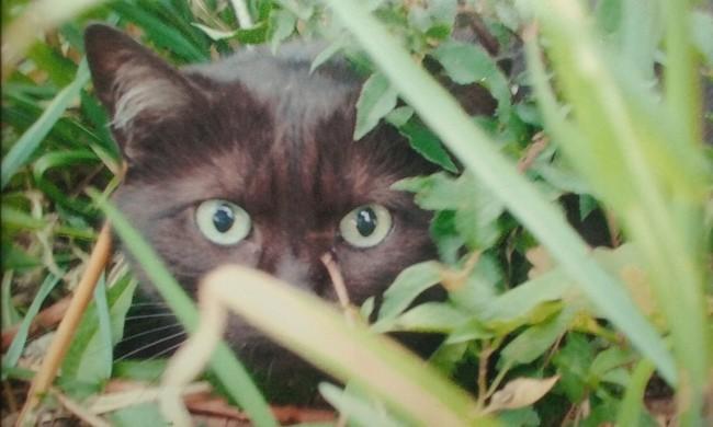 Fifille, chat Gouttière