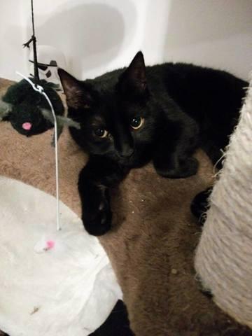 Meryl, chat Gouttière