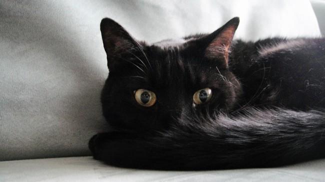 Coco, chat Gouttière