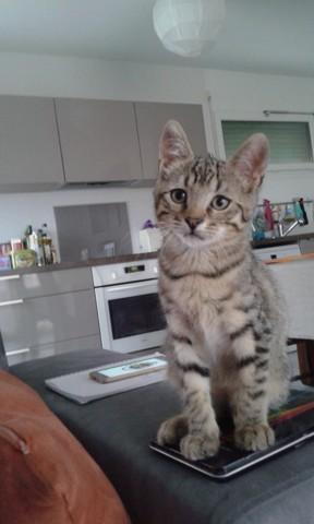 Newt, chaton Gouttière