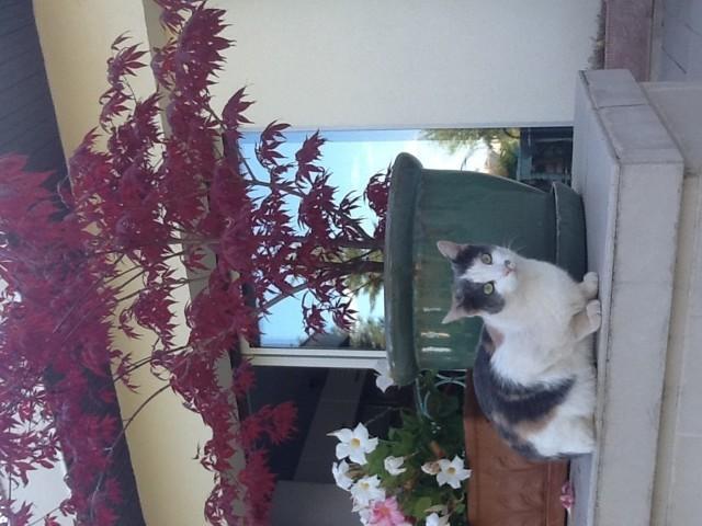 Luna, chaton Gouttière
