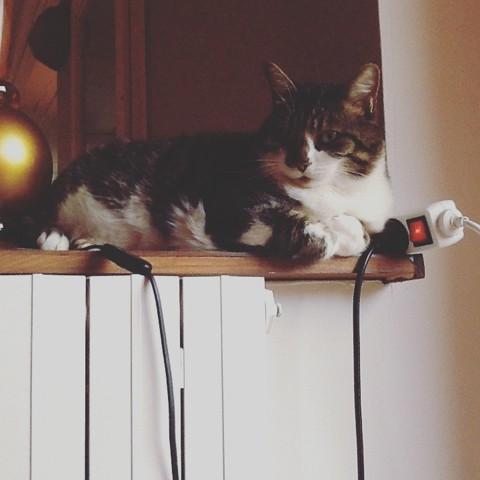 Patex, chat Gouttière
