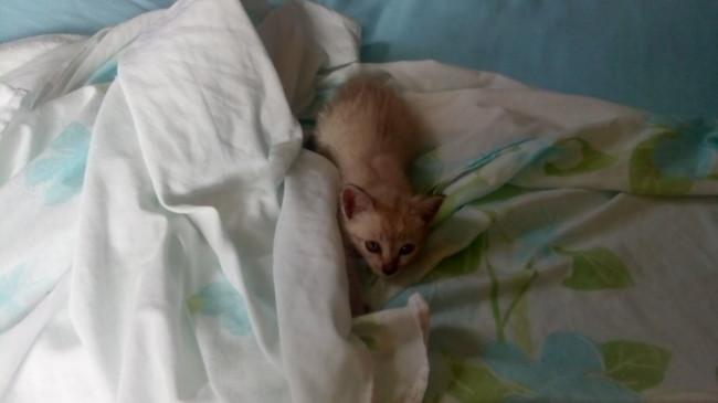 Tatoo, chat Gouttière