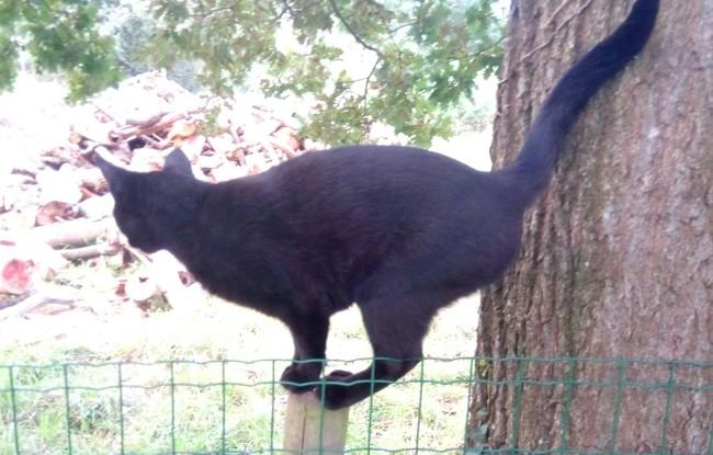 Flèche, chat Gouttière