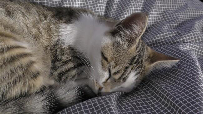 Yoda, chat Gouttière
