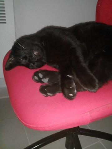 Minuit, chat Gouttière