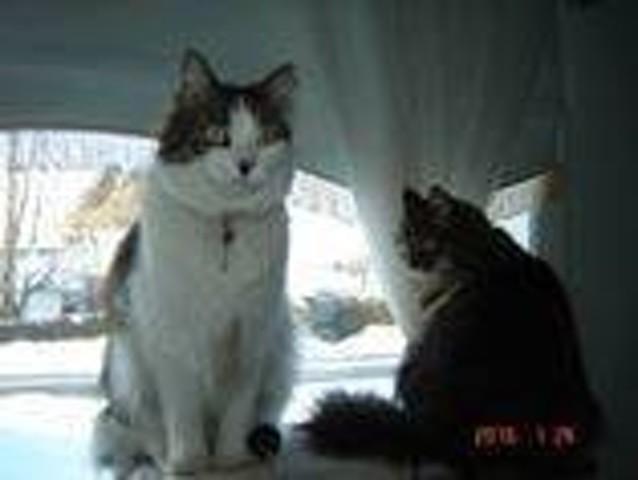 Minette, chat Gouttière