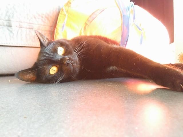 Zoé, chat Gouttière