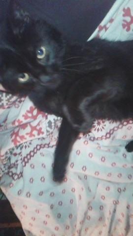 Magic, chat Gouttière