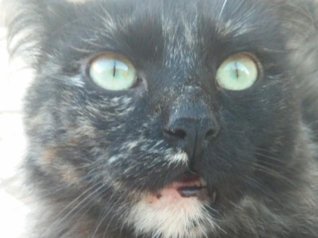 Mystique, chat Gouttière