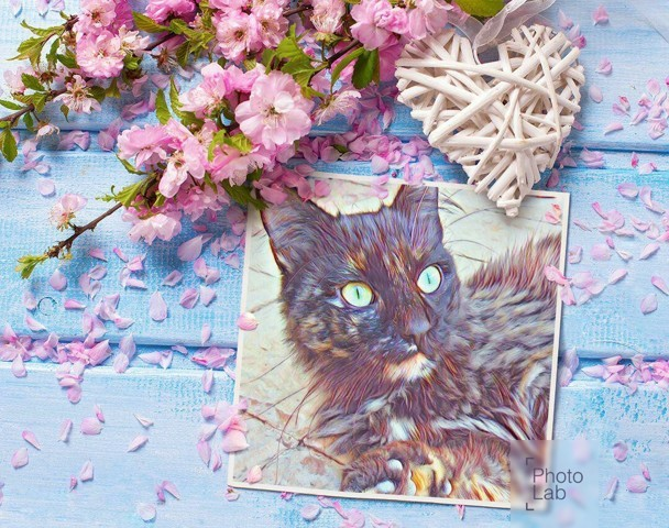 Chipie Décédée, chat Gouttière