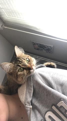 Mango, chat Gouttière