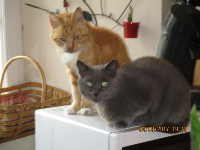 Grogny, chat Gouttière