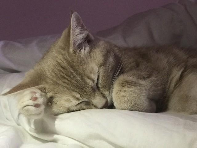 Chipie, chaton Gouttière