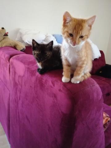 Kokechi, chaton Gouttière