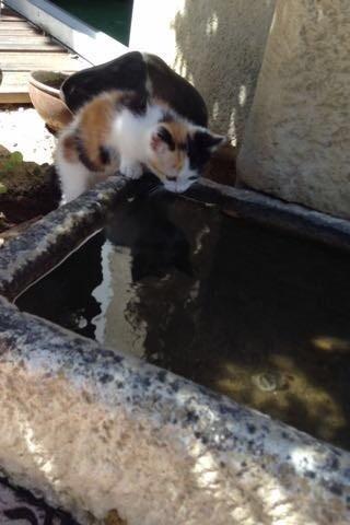 Calie, chaton Gouttière