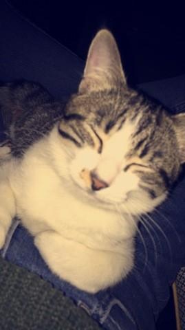 Néo, chaton Gouttière