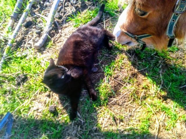 Guenièvre, chaton Gouttière