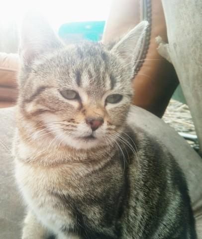 Pantalaimon, chaton Gouttière