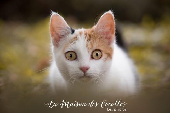 Kawette, chat Gouttière
