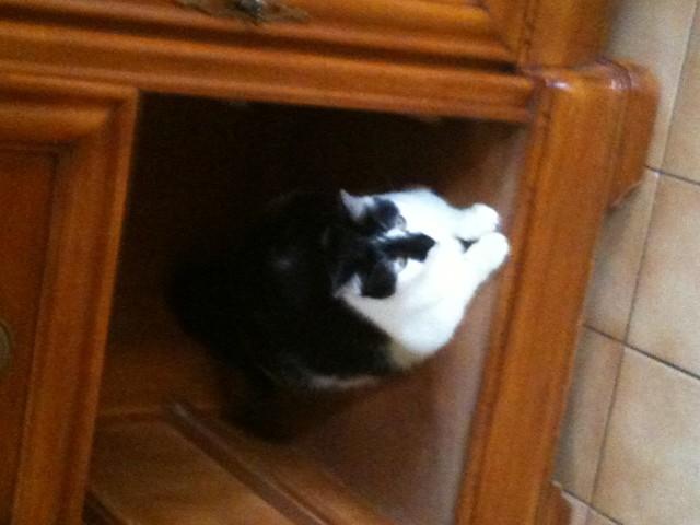 Mimoun, chat Gouttière