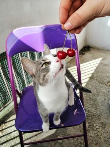 Chelsy, chat Gouttière