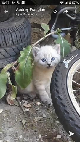 Yuki, chaton Gouttière