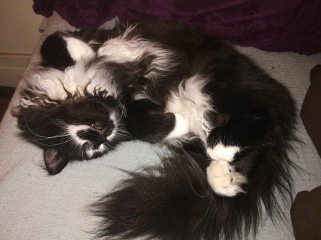 Le Ptit, chaton Gouttière