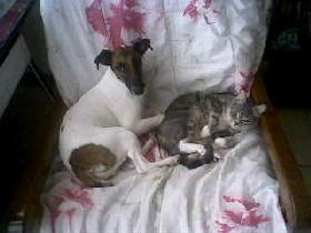 Nina, chat Gouttière