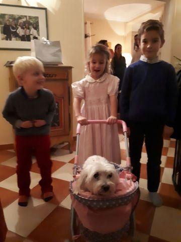 Guedoune, chien Bichon maltais
