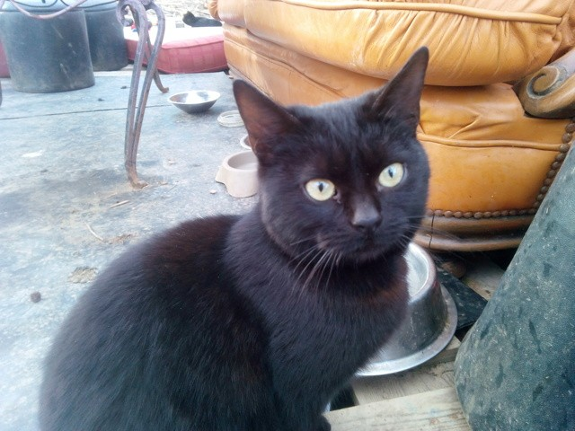 Guenièvre, chaton
