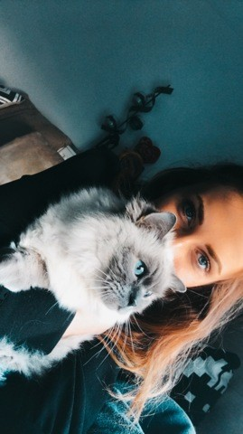 Guiness, chat Ragdoll