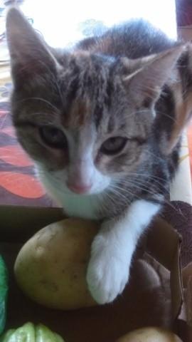 Guipsy, chaton Gouttière