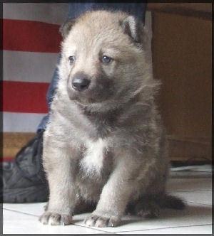 Photo de hadji partit dans un monde meilleur chien chien for Dans un monde meilleur