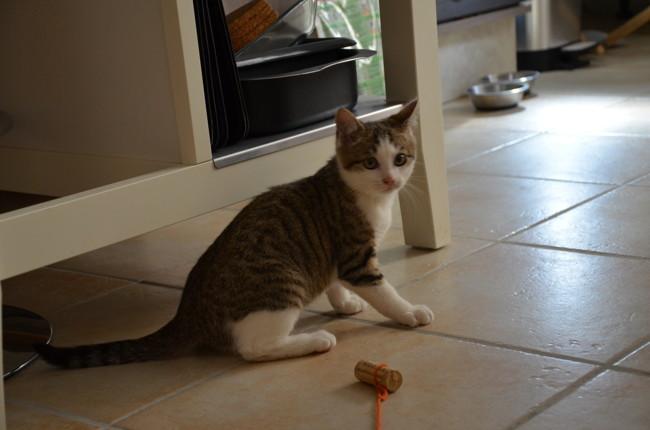 Henri, chaton